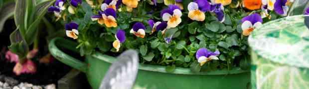 Ook zo'n zin om de bloemetjes weer eens buiten te zetten???? Wacht dan tot 24 maart!!!!