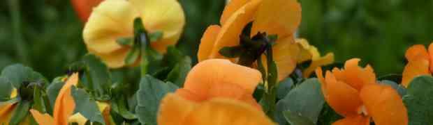 Ook zo'n zin om de bloemetjes weer eens buiten te zetten?? Wacht dan tot 25 maart!